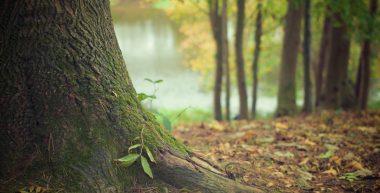 tree care, tree pruning, arboriculture