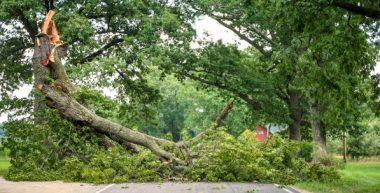 Tree assessment Arborist