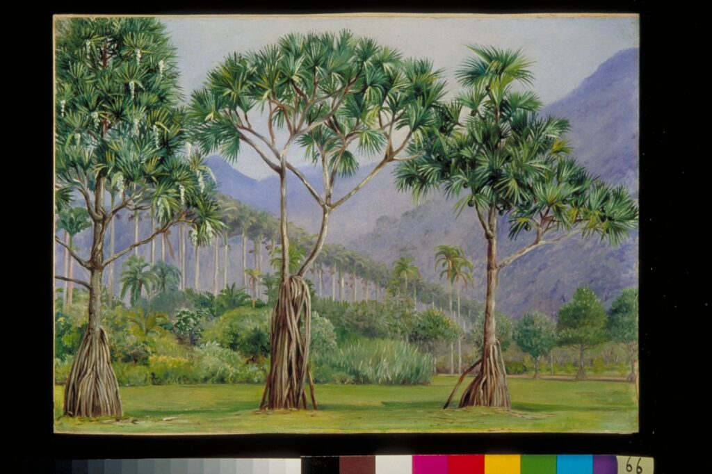 Oil painting of pandan trees