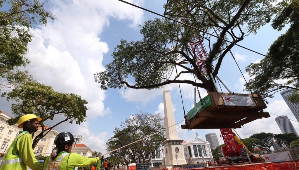 Large tree transplant