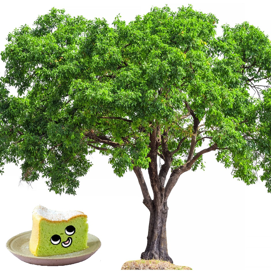 Pandan is a tree