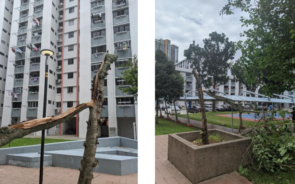 Failed tree