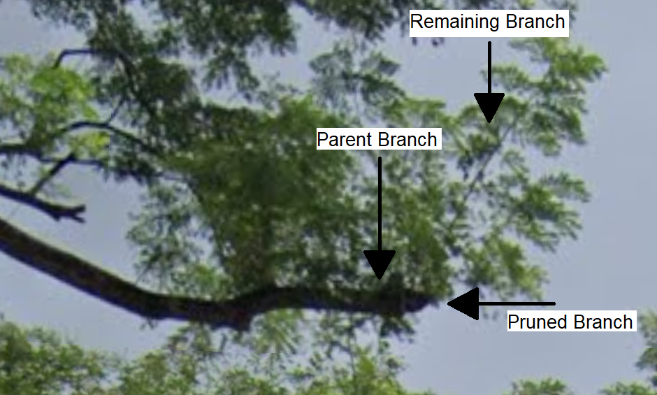 topped branch close-up