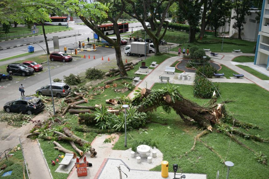 Fallen tree from the Straits Times