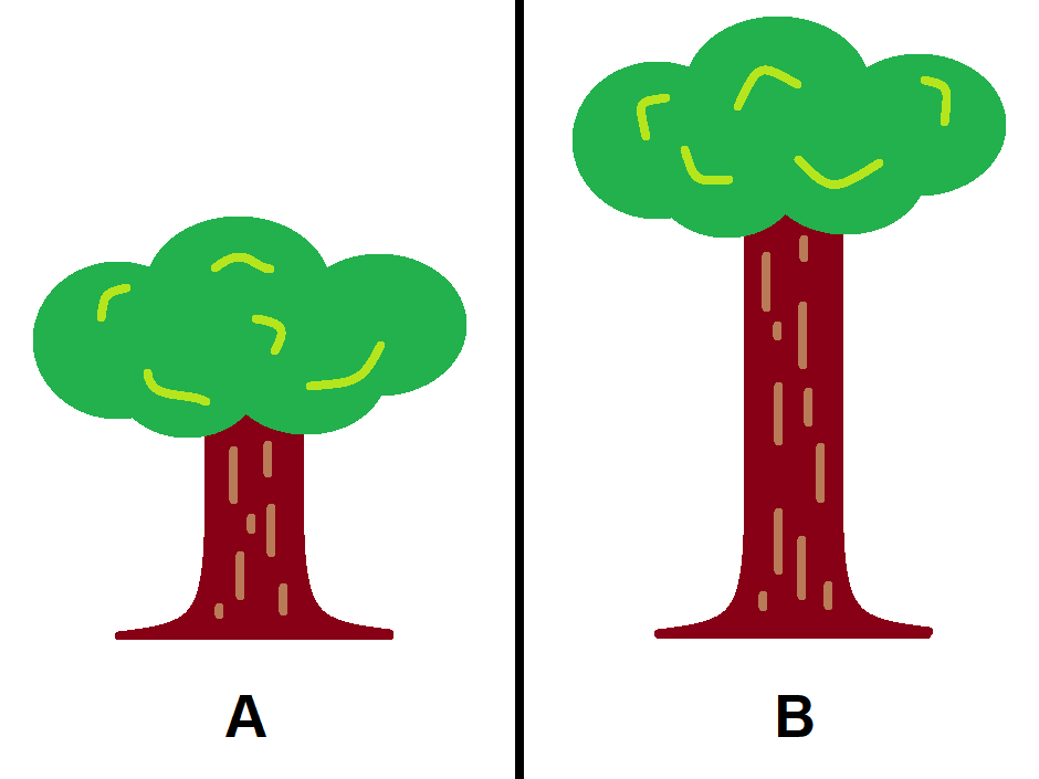 Short and tall tree comparison