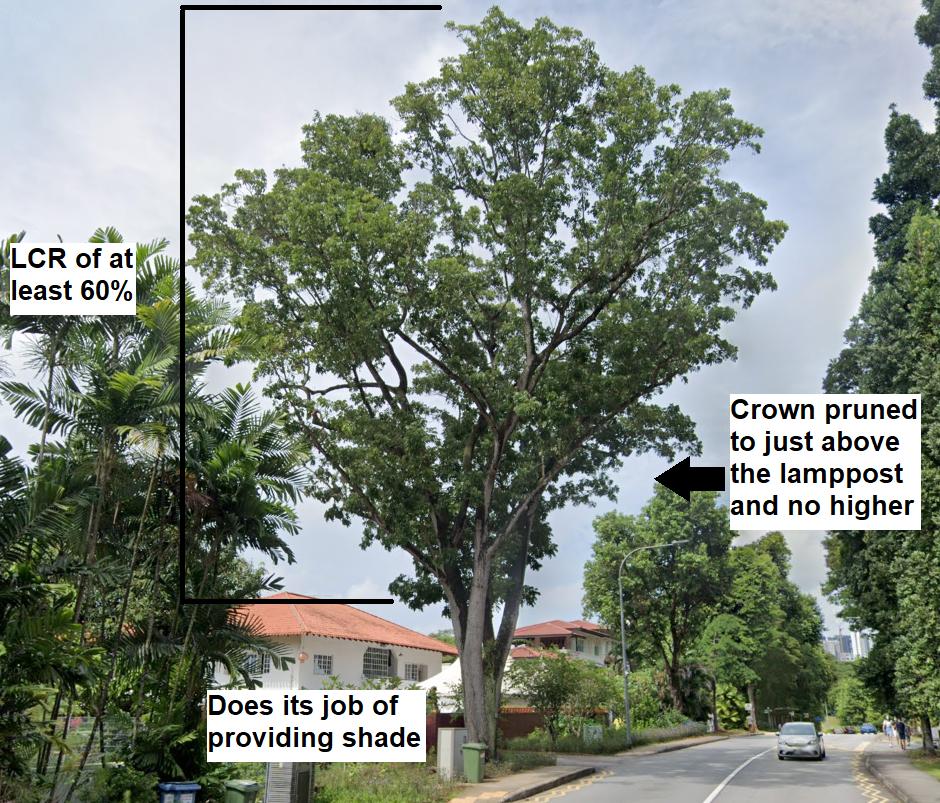 Good street tree